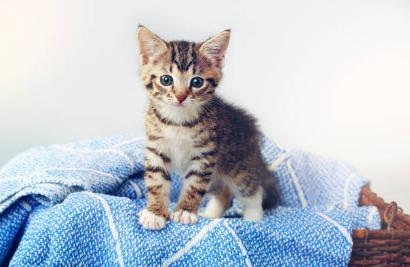 子猫, 感染症