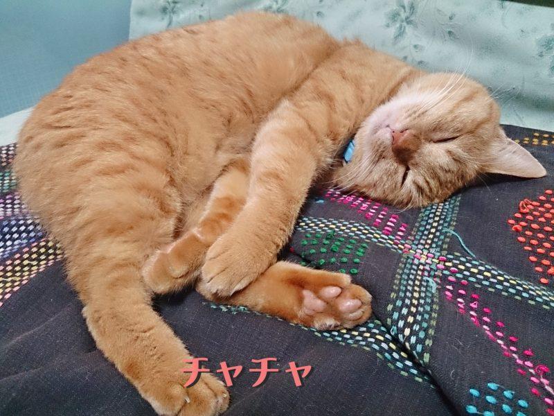 雑種 ,ミックス猫,かわいい,