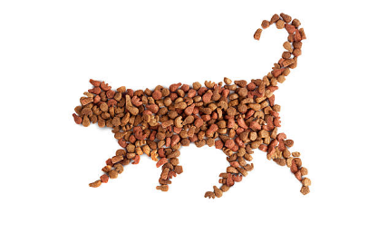猫 吐く 餌
